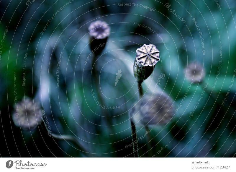 Green Blue Winter Autumn Meadow Death Transience Poppy Seed Senses New start Limp Offense