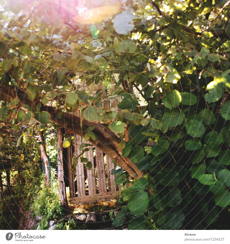 auspicious Beautiful weather Bushes Garden garden door Wooden door Fence Garden fence Cold Natural Brown Green Curiosity Hope Relaxation Mysterious Idyll Magic