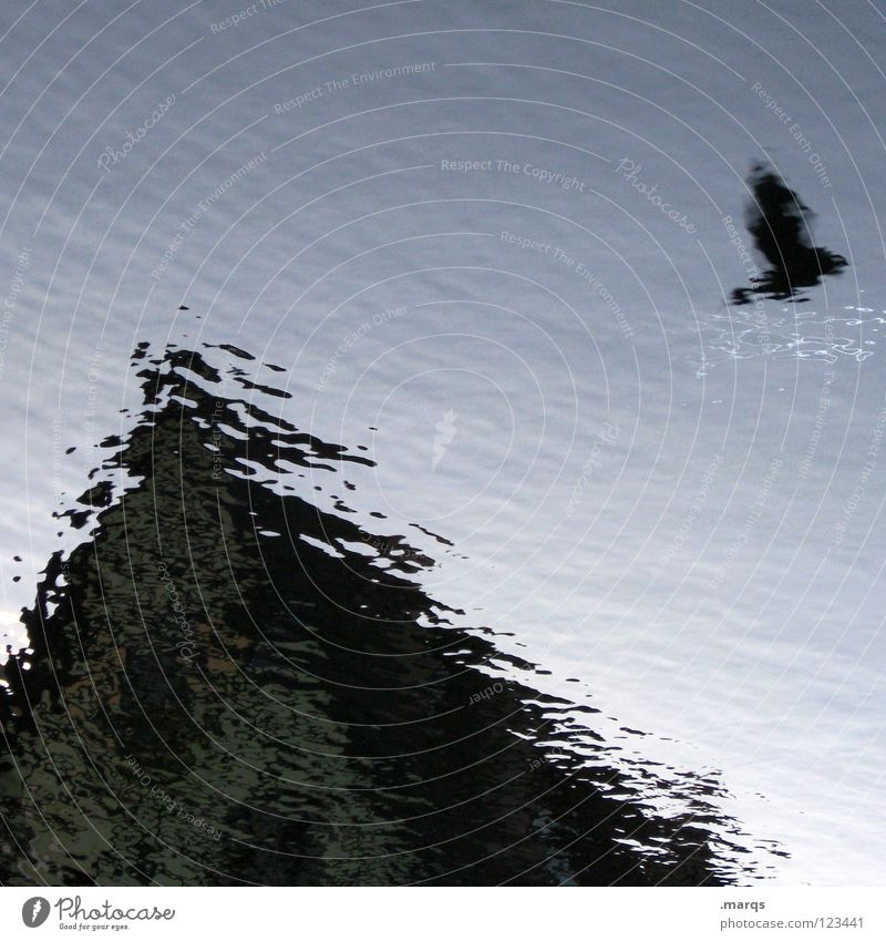 of birds and puddles Bird Pigeon Body of water Puddle Reflection Waves House (Residential Structure) Roof Gable Obscure Architecture Flying Water Blur