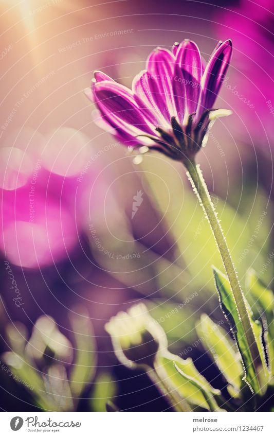 Nature Plant Beautiful Green Summer Flower Leaf Blossom Style Garden Glittering Design Illuminate Elegant Gold Happiness