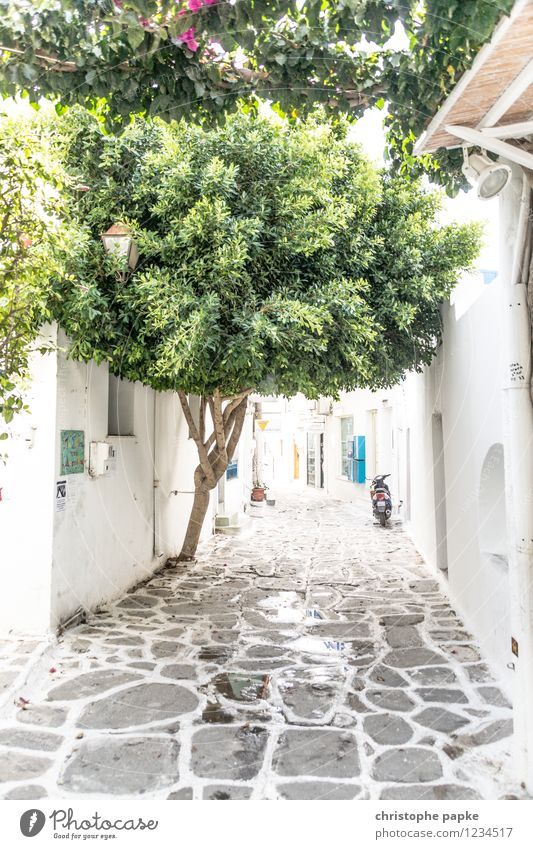 typical cycladic Vacation & Travel Summer Summer vacation Tree Paros Greece Village Small Town Old town Deserted Wall (barrier) Wall (building) Scooter Bright