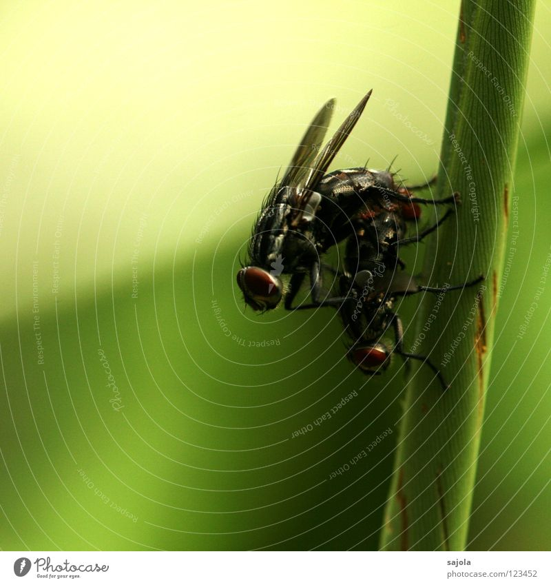 1+1=80 Animal Fly Wing Pair of animals Dark Green 2 Insect Stalk Colour photo Exterior shot Close-up Macro (Extreme close-up) Shallow depth of field