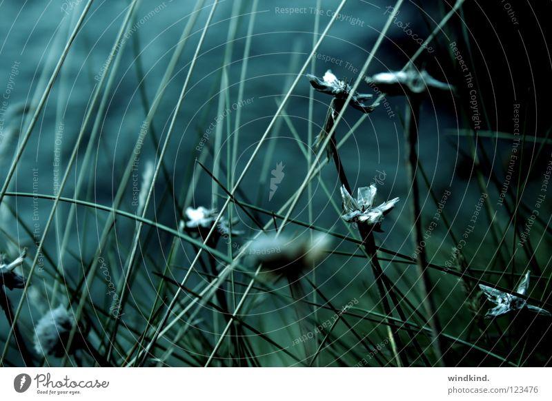 Ocean Flower Green Blue Beach Calm Cold Sadness Twilight Coast Wind Fresh Growth Wild animal Common Reed Blow