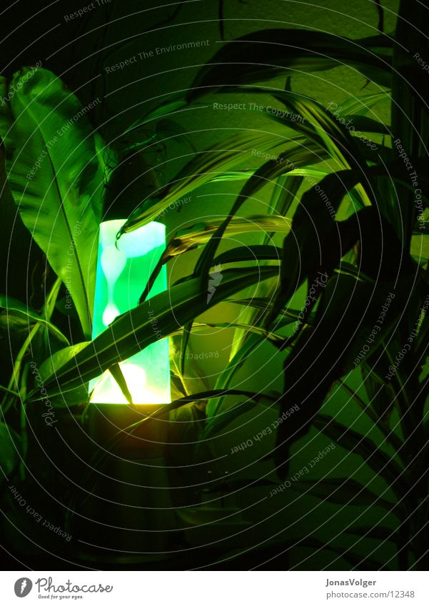 Green lava in the thicket Lava lamp Plant Light Dark Living or residing