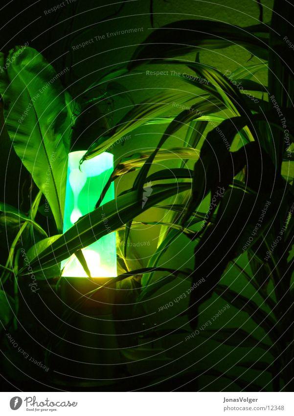 Green Plant Dark Living or residing Lava lamp