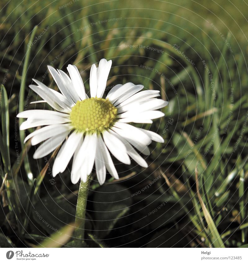 White Flower Green Winter Yellow Lamp Meadow Blossom Grass Spring Park Brown Together Small Lawn Thin