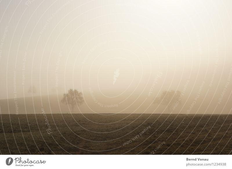 Nature Plant Tree Landscape Environment Warmth Life Emotions Grass Happy Moody Horizon Field Fog Haze Flashy