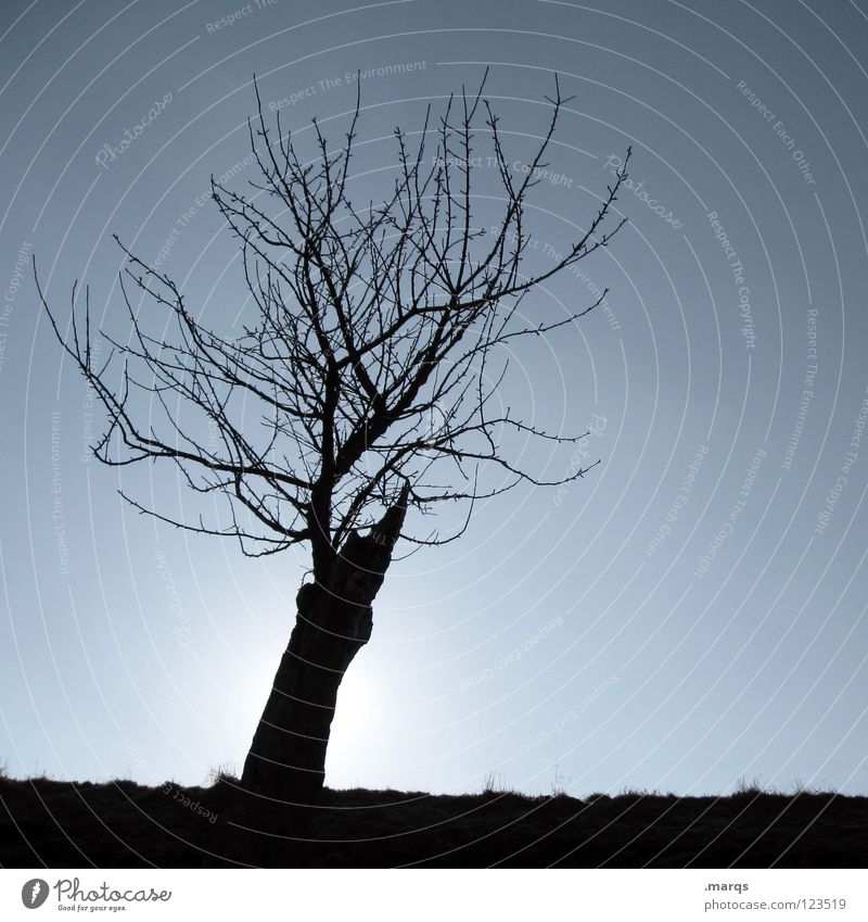 baldheinz Tree Plant Cold Horizon Individual Back-light Black Silhouette Transience Nature Branch Twig Loneliness Single