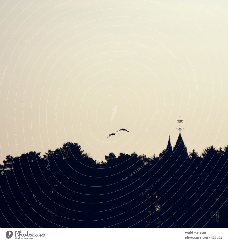 the other day in Waren Roof Forest Spire Bird Historic Fairy tale Fantastic Silhouette Mecklenburg-Western Pomerania Tower Sky Duck Castle Goods (Müritz)