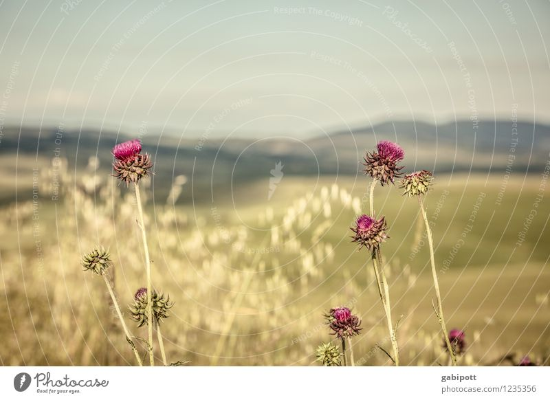 Nature Plant Green Summer Sun Relaxation Landscape Calm Environment Blossom Meadow Brown Horizon Pink Contentment Weather
