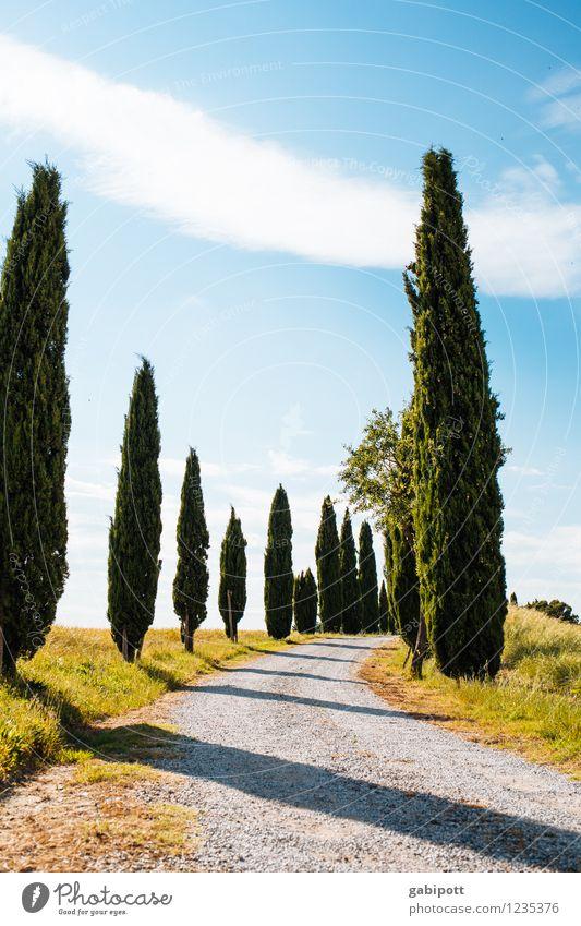 viva italia azzurro means blue. Life Senses Relaxation Calm Fragrance Vacation & Travel Tourism Trip Adventure Far-off places Summer Summer vacation Sun