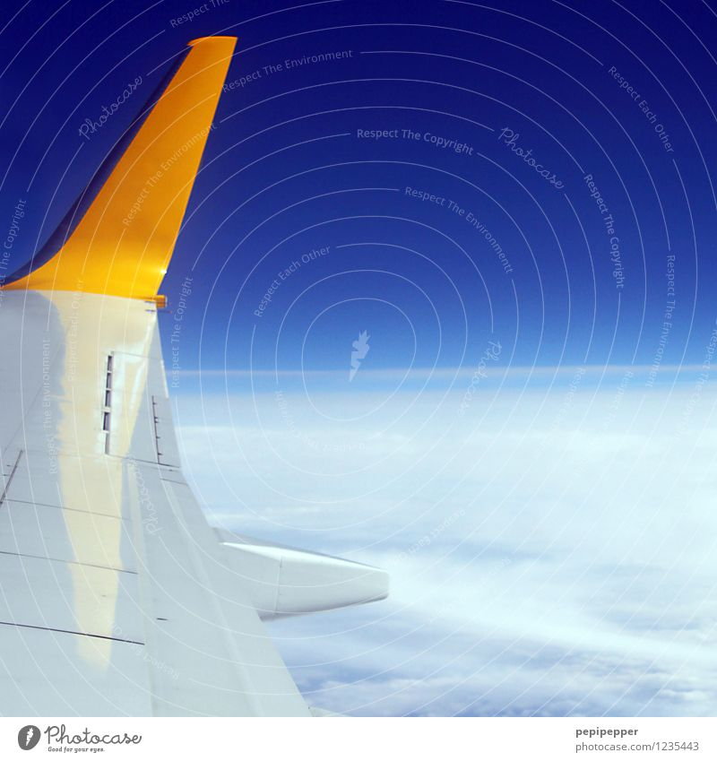 Sky Vacation & Travel Blue Summer Far-off places Yellow Freedom Flying Leisure and hobbies Tourism Aviation Trip Airplane Wing Cloudless sky Summer vacation