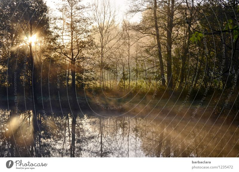Birthday greetings for Tt Nature Landscape Water Sunlight Autumn Climate Beautiful weather Fog Forest Lakeside Pond Illuminate Moody Anticipation Calm Beginning