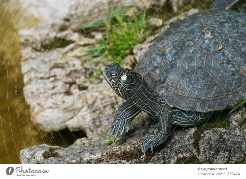 turtle Nature Animal Wild animal Animal face Turtle Tortoise-shell 1 To enjoy Dream Wait Authentic Happy Natural Multicoloured Contentment