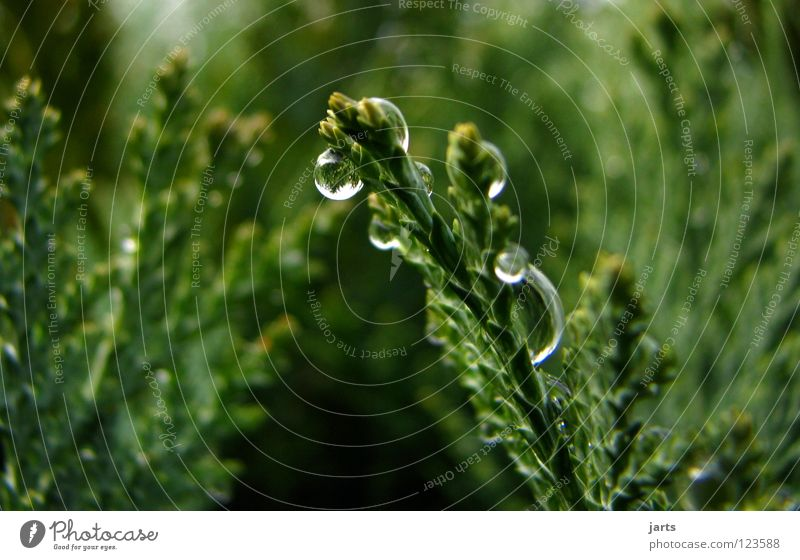 Nature Water Tree Green Autumn Rain Drops of water Wet Bushes Hedge