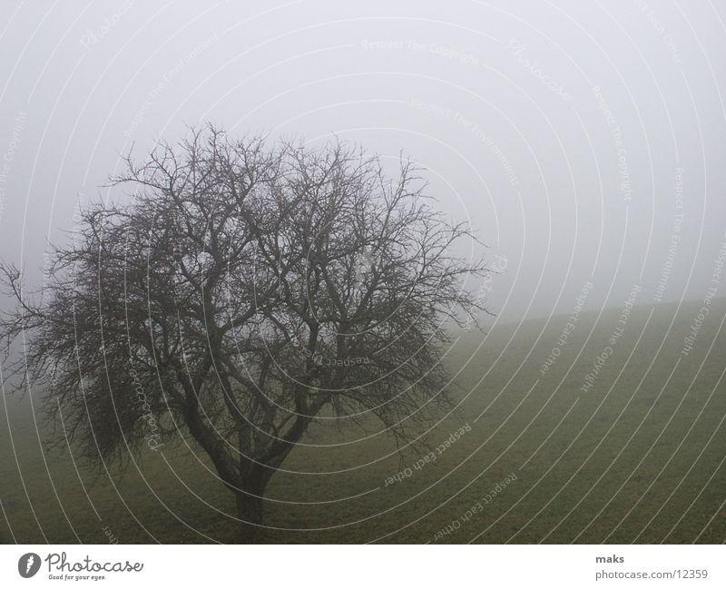 november Autumn November Fog Gloomy Gray Meadow Tree Mountain