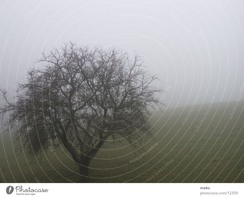 Tree Autumn Meadow Mountain Gray Fog Gloomy November