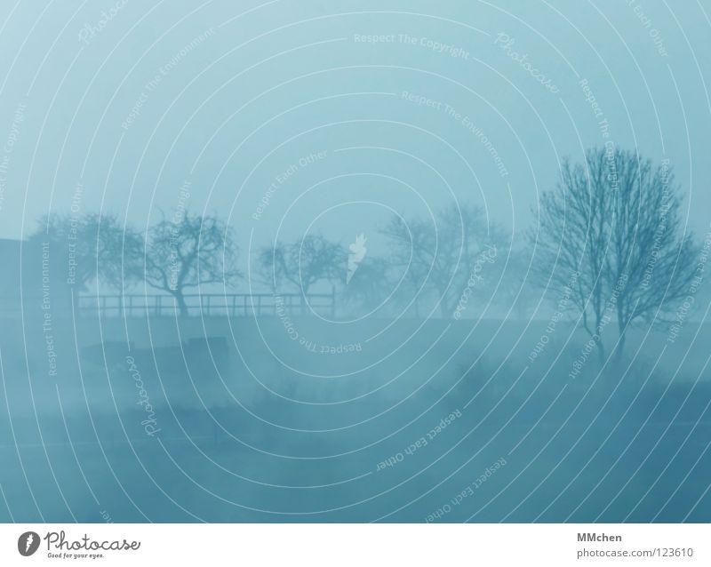 Sky Blue White Tree Winter Dark Cold Weather Fog Gloomy Bushes Hide Dew Mystic Bad weather