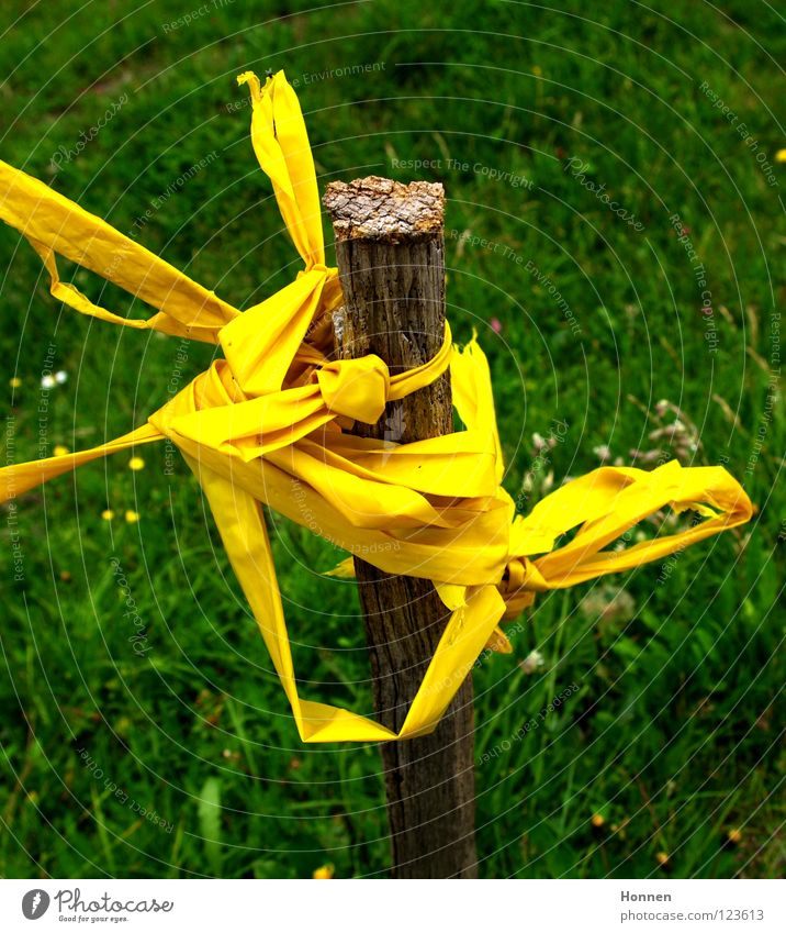 Green Yellow Meadow Grass Brown String Pasture Barrier Stick Muddled Pole Bow Knot Untidy Accuracy