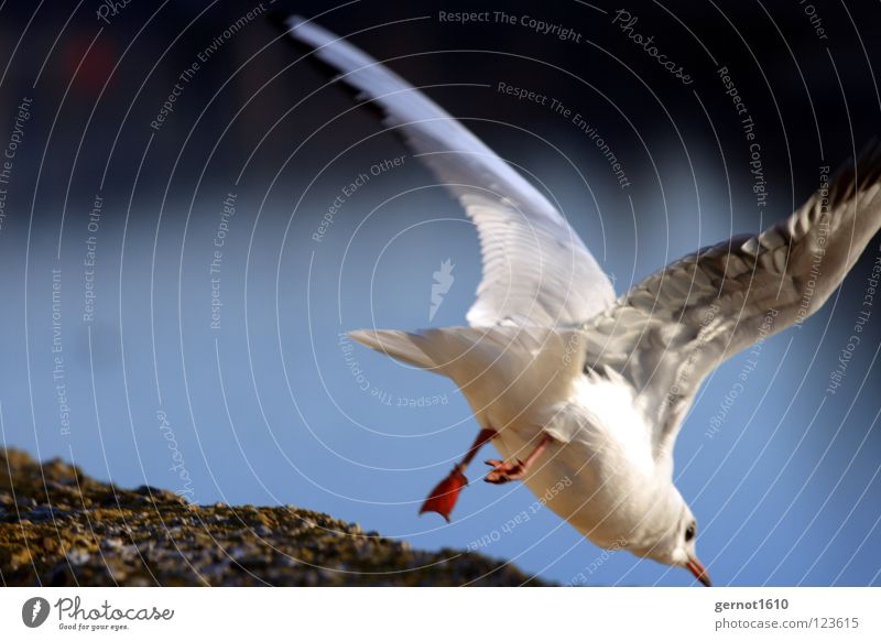 Up, Up and away ... Seagull Speed Jump Ambiguous Corner Wall (barrier) Dive Going Bird Dangerous Fear Panic Escape Flying wings Feather River Lanes & trails