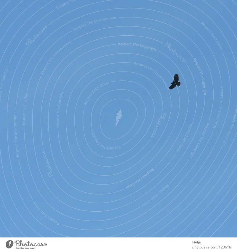 Sky Far-off places Food Bird Flying Tall Aviation Search Dangerous Wing Feather Hunting Beak Thief Feed Outstretched