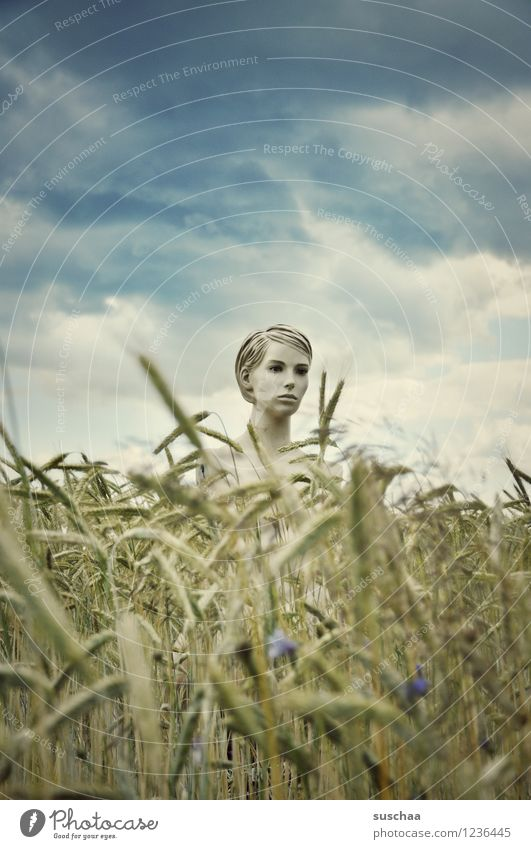 she looked .. Sky Clouds Field Wheat Ear of corn Summer Face Head Mannequin Mysterious