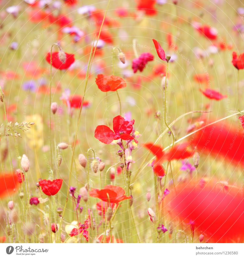 Nature Plant Beautiful Summer Flower Red Leaf Forest Spring Blossom Autumn Meadow Grass Garden Pink Park