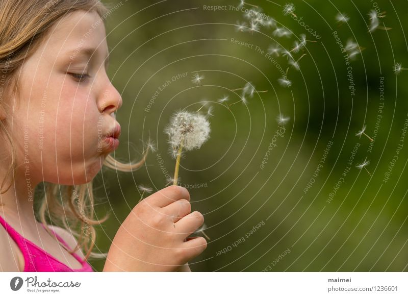 The dandelion Joy Beautiful Hair and hairstyles Playing Children's game Summer Girl Infancy 1 Human being 3 - 8 years Nature Spring Flower Blonde Long-haired