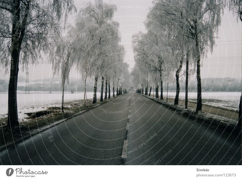 Trees left right along the road to the end Winter Cold Center line Asphalt Cycle path White Bad weather Ice Frost Street Line Snow End Exterior shot