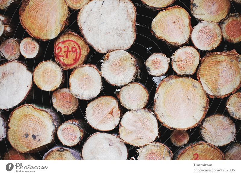 Interfaces. Forest Tree trunk Tree bark Annual ring Digits and numbers Stack of wood Wood Lie Natural Clean Brown Red Black Emotions Colour photo Exterior shot