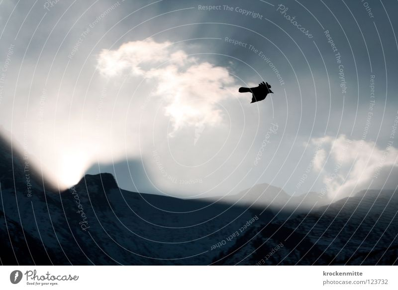 Sky Clouds Animal Snow Mountain Freedom Lighting Bird Flying Wing Switzerland Alpine pasture Mountain range