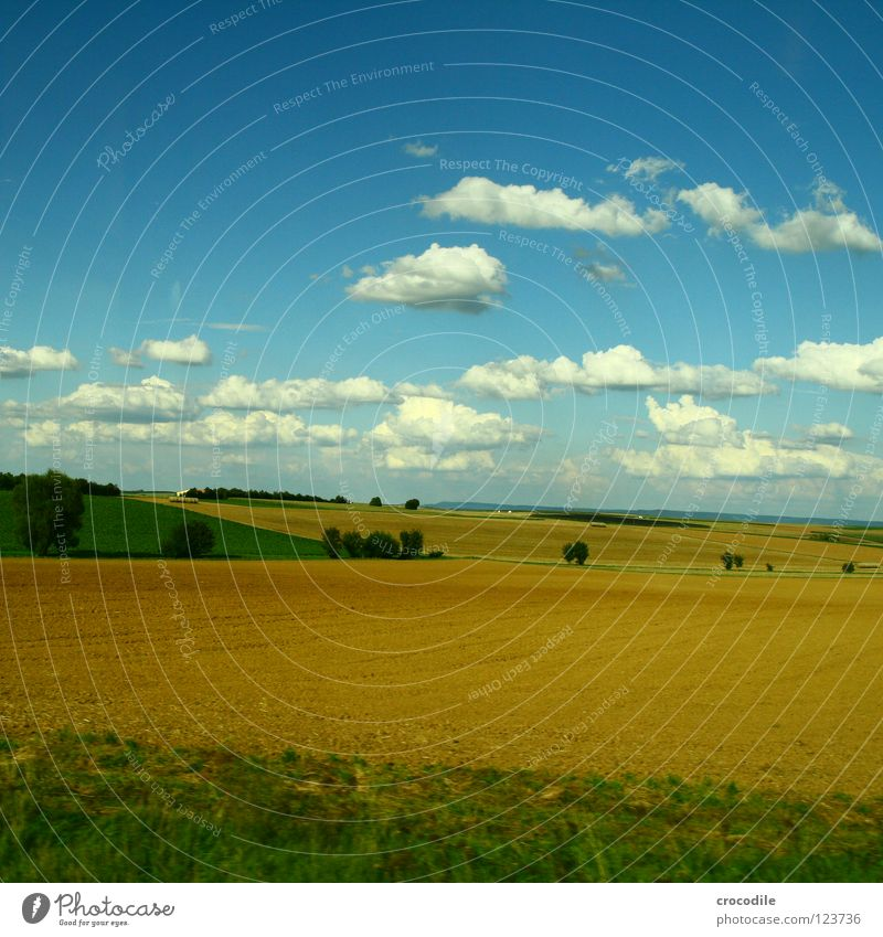 sheep clouds over the middle of germany II Field Agriculture Meadow Summer Clouds Tree Bushes Manmade landscape Production Blue sky Nutrition