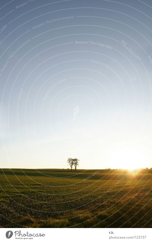 From the life of a tree I Tree Field Sunset Back-light Meadow Autumn Nature Sky Landscape