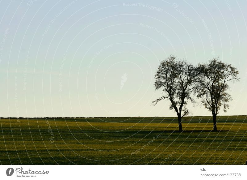 From the life of a tree II Tree Field Sunset Meadow Autumn Nature Sky Landscape