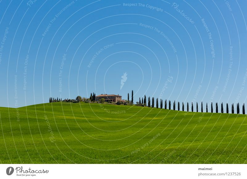Vacation & Travel Blue Green Tree Loneliness Landscape House (Residential Structure) Spring Meadow Field Idyll Esthetic Italy Hill Farm Cloudless sky