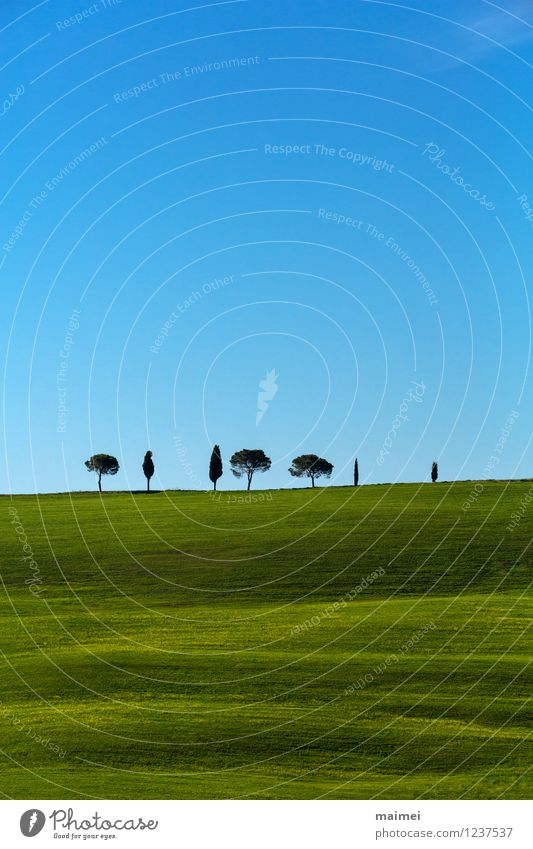 Seven lonely trees in green Tuscany meadows Vacation & Travel Freedom Sun Landscape Cloudless sky Clouds Horizon Spring Beautiful weather Tree Grass Meadow Hill