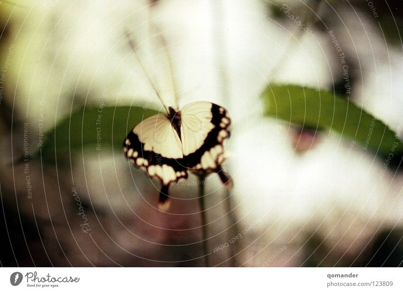 Nature Beautiful White Flower Green Red Summer Leaf Spring Orange Wing Butterfly Depth of field Exotic Feeler