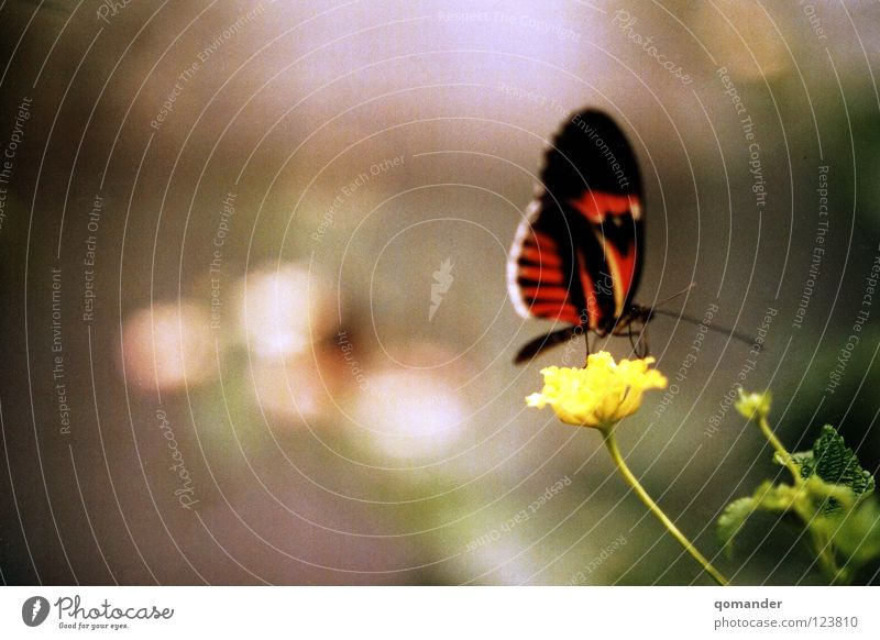 Nature Beautiful White Flower Green Red Summer Spring Orange Wing Butterfly Depth of field Exotic Feeler Animal