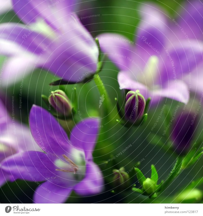 Nature Plant Beautiful Colour White Summer Flower Spring Blossom Background picture Feasts & Celebrations Growth Fresh Violet Bud Botany