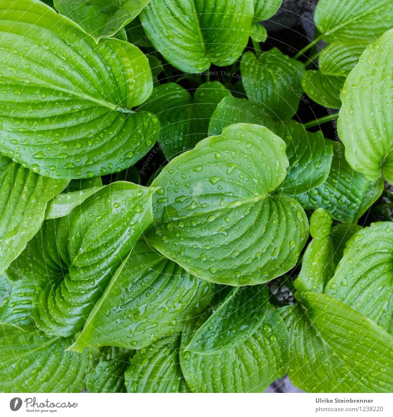 Diverse with moisturizing cream Nature Plant Water Drops of water Summer Rain Flower Leaf Foliage plant Pot plant Garden Glittering Growth Wet Natural Juicy