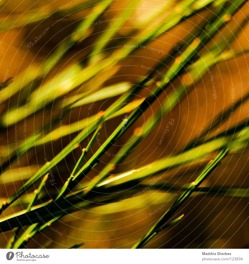 Green Red Meadow Grass Orange Background picture Blaze Stalk Common Reed Pteridopsida Point of light Fiery Broom