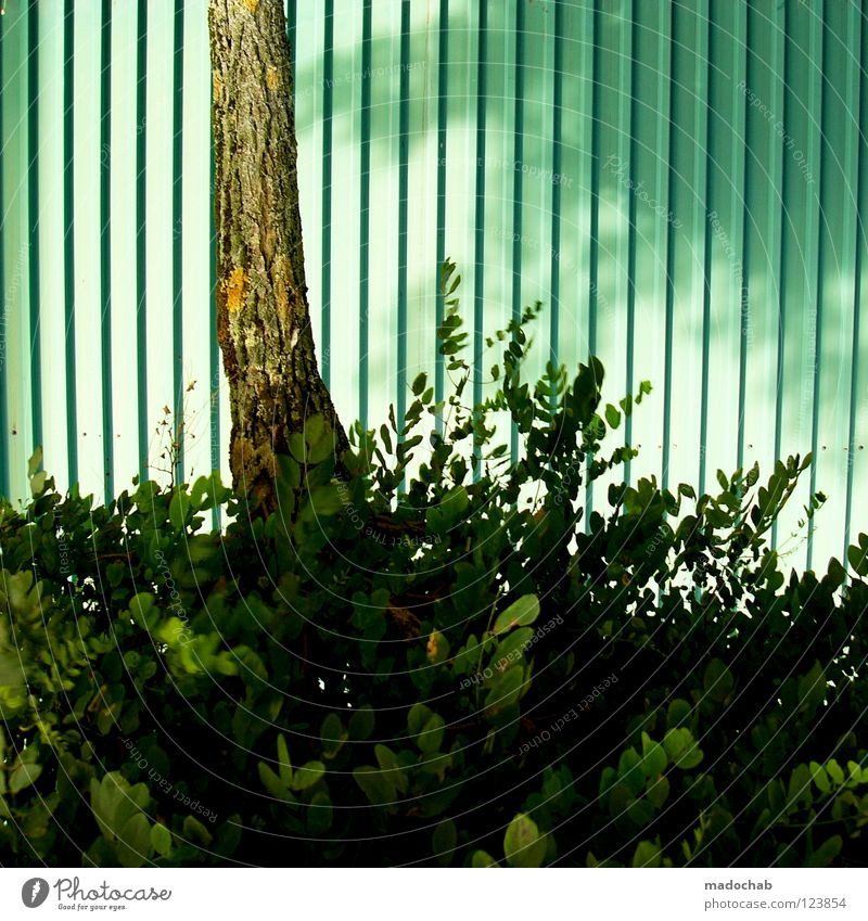 Nature Green Tree Plant Leaf Turquoise Tree trunk Trashy Go crazy Garage door