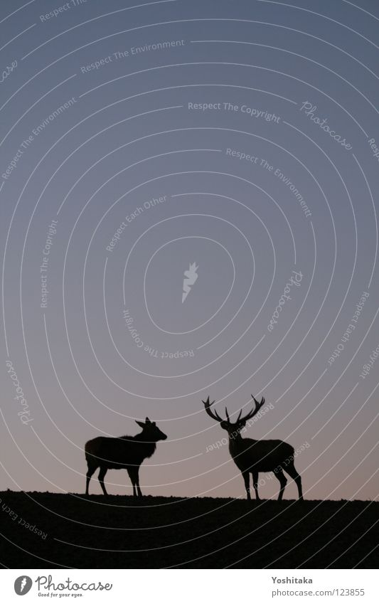 Two-something loneliness Roe deer Antlers Animal 2 Loneliness Calm Infinity Horizon Twilight Together Mammal Love Communicate Peace Contrast Evening Sky