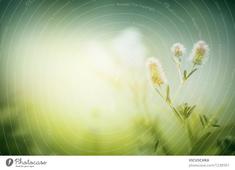 Green meadow in the morning fog Lifestyle Design Leisure and hobbies Summer Garden Environment Nature Plant Sunlight Spring Autumn Beautiful weather Wild plant