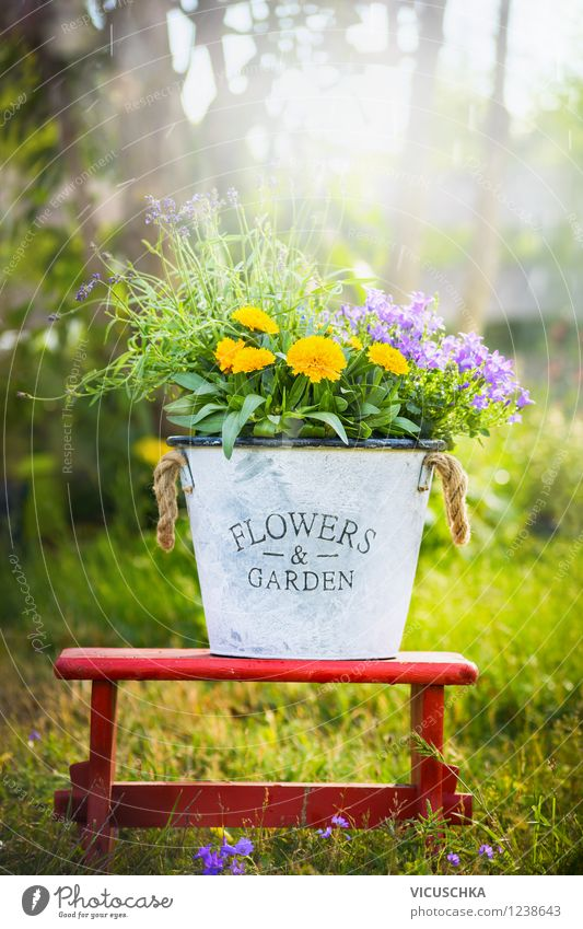 Garden and flower decoration Lifestyle Style Design Leisure and hobbies Chair Nature Plant Sunlight Spring Summer Beautiful weather Flower Leaf Blossom