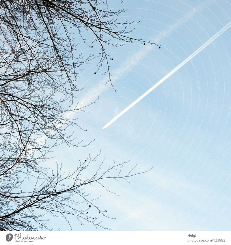 Sky White Tree Blue Vacation & Travel Clouds Above Line Brown Airplane Transport Tall Crazy Aviation Logistics Level