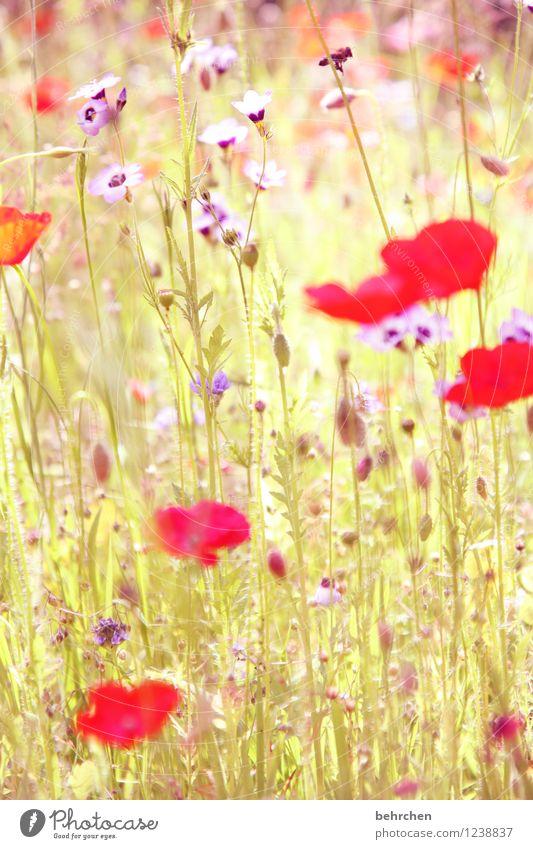 Nature Plant Beautiful Summer Flower Red Leaf Blossom Spring Meadow Grass Garden Park Growth Fresh Wild animal
