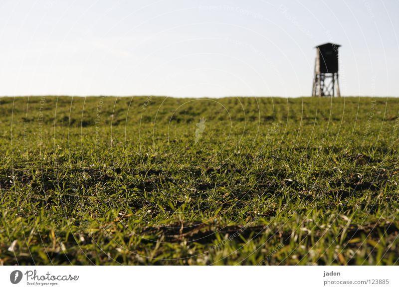 Sky Plant Grass Field Fear Wait Hunting Mammal Hunter Brandenburg Hunting Blind Sacrifice Rifle Field vole