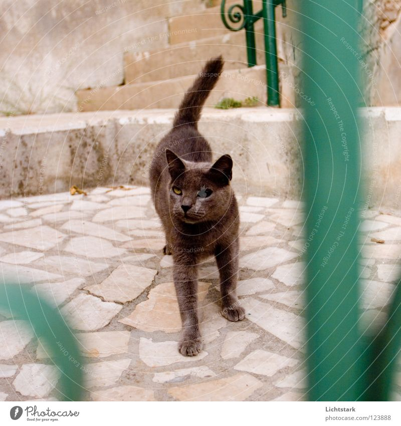Black Animal Cat Anger Past Traffic infrastructure Aggravation Experience Domestic cat Fighter Stone floor