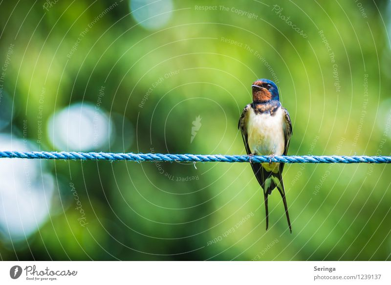 Beautiful view ( Swallow ) Nature Plant Animal Sunlight Summer Garden Park Bird Animal face Wing 1 Flying Colour photo Exterior shot Day Light Reflection